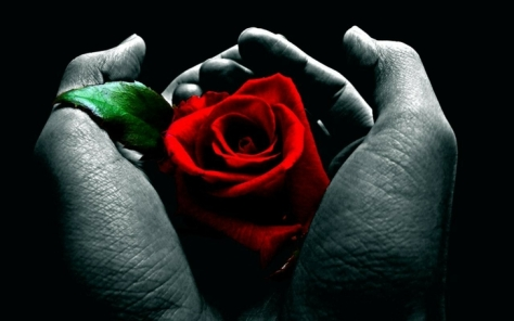 flowers-hands-roses-red-flowers-red-rose-1280x800-wallpaper_1